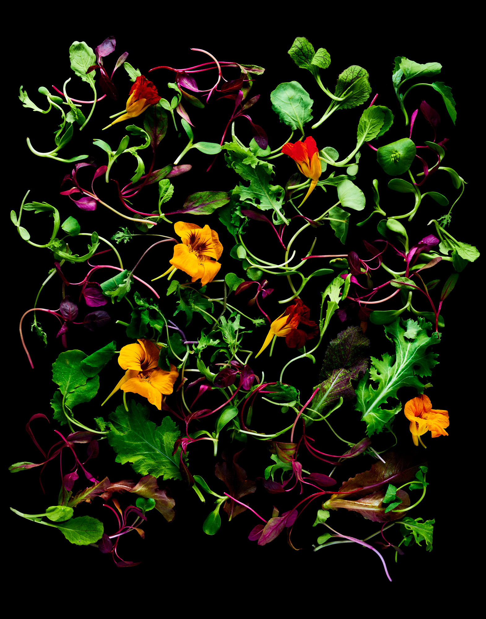 170503-Group-Microgreens-157-V1